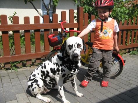 dalmatiner-fahrrad