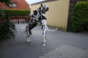 welpen-tag88_4163