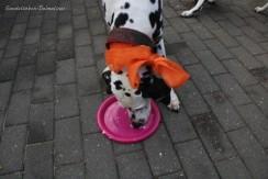 kuchen-gefressen_img_3976