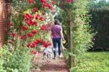 Hummel mit Frauchen und Rosen