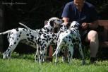 Alle Drei Stammhunde